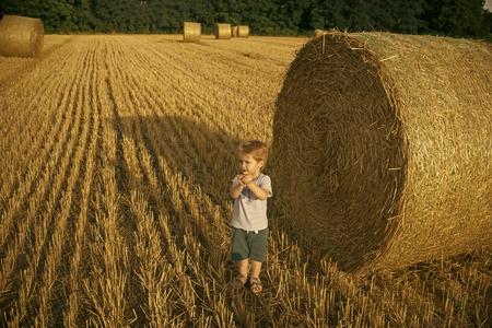 harvesting on the farm. Baby boy on hay rolls Stock Photo