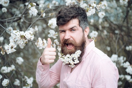 Bearded man show thumbs up at blossoming trees. Happy man with cherry blossom in beard. Hairdresser salon. Hipster enjoy flower bloom. Barber and hair salon. I like spring