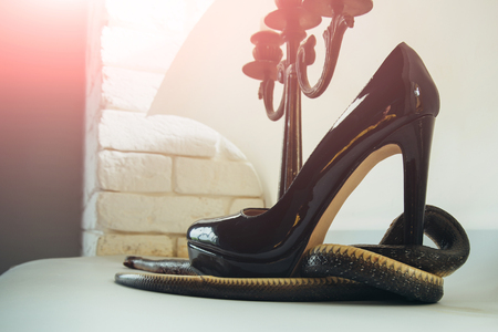 Cheeky heel. Snake wrapped around high heel shoe and candlestick. Snake guard fashion shoe at candelabra. Leather footwear and serpent animal. Fashion and style. Still life design Stock Photo
