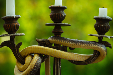 Avoid risk. Snake wrapped around candlestick on nature. Still life with candelabra and snake outdoor. Divinity and devil. Design art and natural decoration
