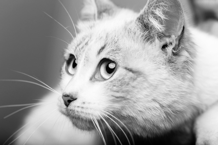 funny cat. cat. cat or kitten, small, domestic animal with blue eyes, whiskers and fluffy, furry coat sitting in human arms on blurred background. Pet care and veterinarian