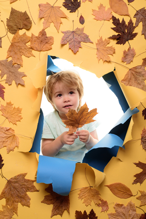 Autumn time for Fashion sale. Leaf fall copy space. Leaf fall trend and vogue. Advertisement concept. Autumn celebrate. Black friday shopping. Happy cute clever boy. Autumn tree and forest. Stok Fotoğraf
