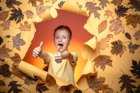 Autumnal foliage. Adorable funny children toddlers. Autumn leaves background. Cute little boy. Autumn happy people and joyHello november. Copy space for text.