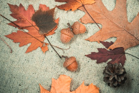 Hello September. Leaf fall time for Fashion sale. Hello Autumn and go shopping Dreams. Colorful autumn and dry autumn leaf. Stock Photo