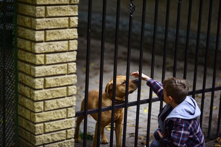 Save the pups. Little boy patting dog. little boy in love with animals. Save dogs from animals shelter
