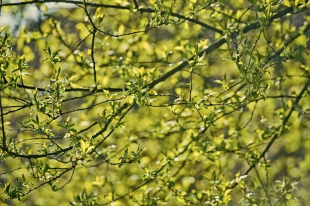 Tree branch with young green leaves on sunny day Stockfoto