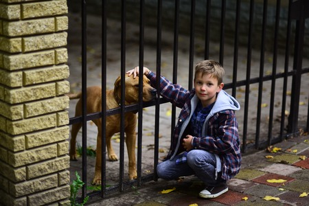 Enjoy being my pet dog. Little boy adopt pet dog from animals shelter. Little boy play with pet dog. You cant buy love, but you can rescue a dog