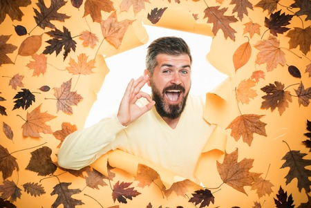 Man are preparing for autumn sunny day. Autumn boy preparing for Autumn sale. Handsome funny male with background board for Copyspace. Autumn concept. Bearded man lies on an orange background. Stock Photo