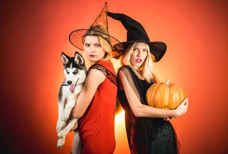 Stylish sexy girls best friends ready for party, over orange background. Best friends girls celebrates Halloween. Photo of two young females with Halloween pumpkin and little dog Husky, having fun.
