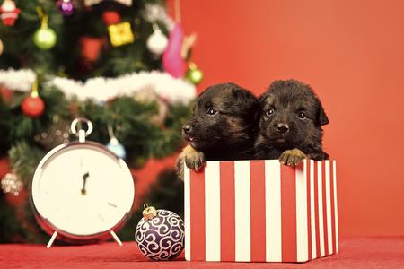 Year of dog, holiday celebration.