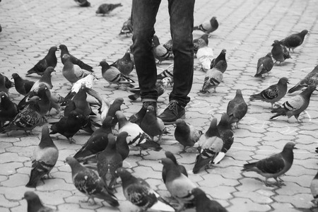 Male legs in blue jeans standing with pigeons