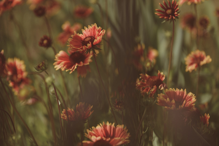 Wild and beautiful. Flowers in blossom. Blossoming flowers on nature landscape. Idyllic summer nature. Flowering plants. Wild flowers on summer field. Beauties of nature, vintage filter