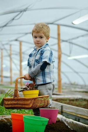 home orangery. little boy hold floral basket in home. small baby boy working in home orangery. home orangery for growing plants. keeping plants refreshed Imagens