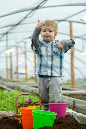 modern greenhouse. small boy work in modern greenhouse. modern greenhouse worker in checkered shirt. modern greenhouse plantinf with little boy. going green is a way of life Stock Photo
