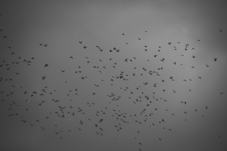 Autumn grey sky. Stock Photo