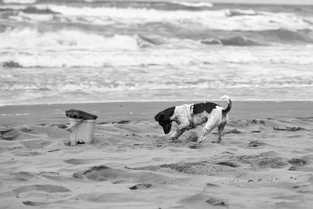 Dog digging in sand Banque d'images - 114512857