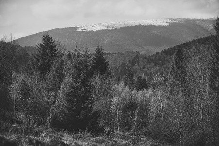 Mountain forest landscape on a clear day. Stockfoto