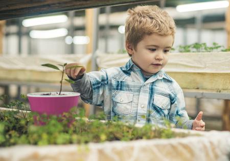 kid work in orangery. kid work in orangery with flowers and trees. small kid work in orangery growing plant. kid gardener work in orangery. making the world green