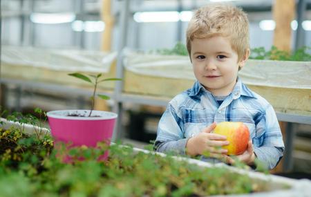 schoolboy in greenhouse. small schoolboy in greenhouse with apple. schoolboy in greenhouse on lunch break. small gardener schoolboy eating apple in greenhouse. picking the best one Reklamní fotografie