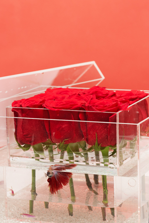Valentines day present. Love and passion. Aquarium with fish and roses. Flower shop. red rose bouquet in box. Floral design. I love roses. be my valentine.