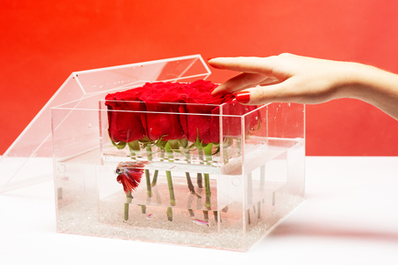Aquarium with fish and roses. Flower shop. Love and passion. red rose bouquet in box. Valentines day present. Floral design. I love you so much. skincare. female hand touch tender petals.