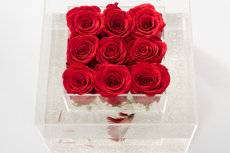 red rose bouquet in box. Aquarium with fish and roses. Flower shop. Floral design. Love and passion. Valentines day present. They are as beautiful as you. Stok Fotoğraf