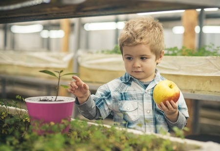healthy environment. child fight for healthy environment growing vegetable and fruit. healthy environment for our children. let make enviromnet healthy. Stock Photo