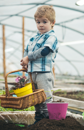 home greenhouse. small baby boy working in home greenhouse. home greenhouse for growing plants. little boy hold floral basket in home greenhouse. turn your hobby into business Stock Photo