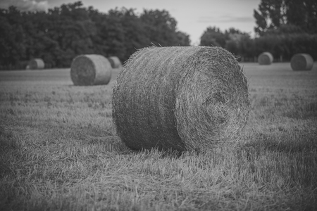 Harvest landscape with straw bales