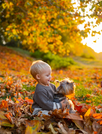Toddler boy enjoy autumn with dog friend. Small baby toddler on sunny autumn day walk with dog. Warmth and coziness. Happy childhood. Sweet childhood memories. Child play with yorkshire terrier dog