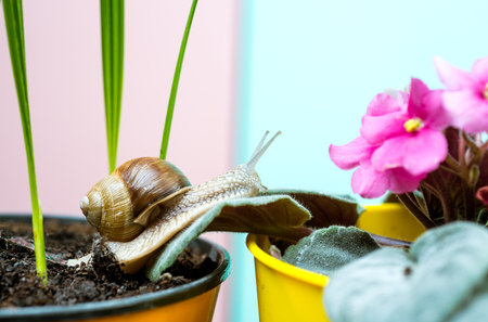 Cute snail near green plant. Natural remedies. Adorable snail close up. Little slime with shell or snail in plant pot. Cosmetology beauty procedure. Healing mucus. Cosmetics and snail mucus