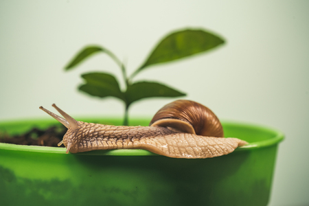 Healing mucus. Cosmetics and snail mucus. Cosmetology beauty procedure. Cute snail near green plant. Natural remedies. Adorable snail close up. Little slime with shell or snail in plant pot Stock Photo