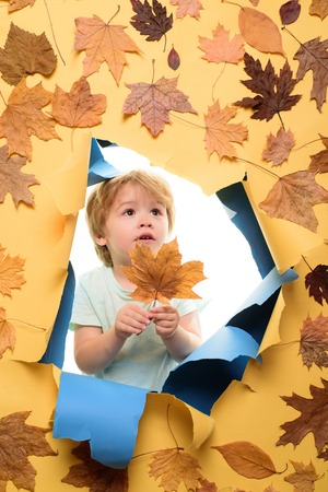 Cute little child boy holding gold leaf on yellow background. Boy in seasonal clothes with golden leaf. Cute little boy in autumn playing with leaves on autumn leaves background.