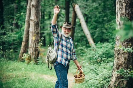 Recogiendo setas. Anciano caminando. Abuelo pensionista. Senderismo senior en el bosque.