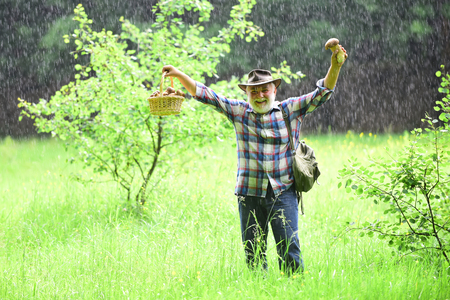 Mushroom in the forest, senior man collecting mushrooms in the rainy forest. Imagens
