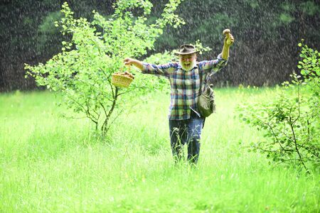 Picking mushrooms in rain. Mature man with mushrooms in basket over rainy background. Mushroom in the forest, senior man collecting mushrooms in the forest.