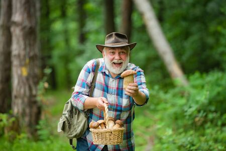 Picking mushrooms. Happy Grandfather with mushrooms in busket hunting mushroom. Mushrooming in nature.