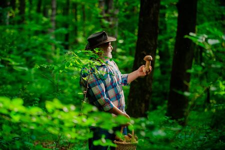 Picking mushrooms. Grandpa Pensioner. Senior hiking in forest. Happy Grandfather. Gathering Wild Mushrooms.