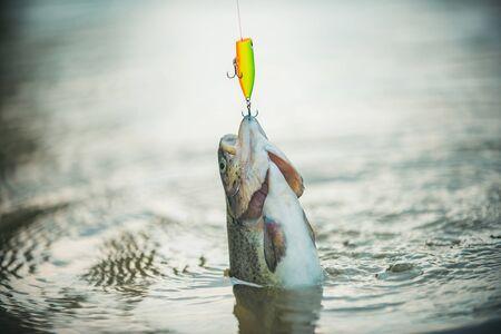 Salpicaduras de pesca de lubina. Cabeza de pez y anzuelo. Tímalo de río en el anzuelo. Pesca de lubina. Trucha. Foto de archivo