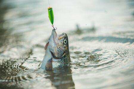 Lure fishing. Fishing - relaxing and enjoying hobby. Fishing. Brown trout fish. Still water trout fishing.