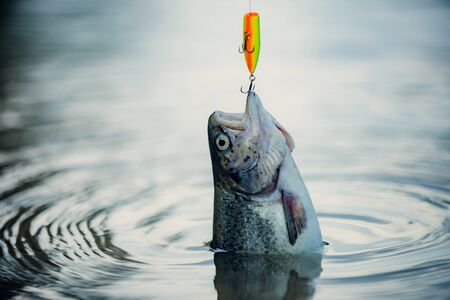 Bass fishing. Fish head and fishing hook. Concepts of successful fishing Stock Photo