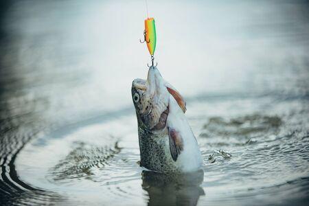 La pesca è diventata un'attività ricreativa popolare. Pesca in fiume. Trota iridea Steelhead. Archivio Fotografico
