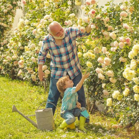 Flower rose care and watering. Grandfather with grandson gardening together. I love our moments in the countryside - remember time. Dad teaching little son care plants. 스톡 콘텐츠