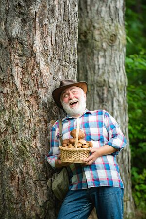 Mushrooming in forest, Grandfather hunting mushrooms over summer forest background. Mushrooms. Happy man holding a freshly picked mushroom. 版權商用圖片