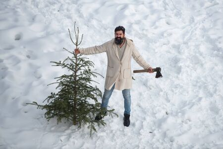 Young man is carrying Christmas tree in the wood. The morning before Christmas. Portrait of a brutal mature Santa Claus. Bearded man with freshly cut down Christmas tree in forest.