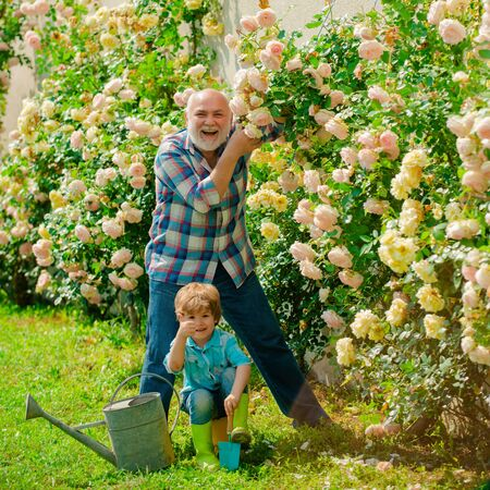 Little boy and father over roses background. Watering flowers in garden. Portrait of grandfather and grandson while working in flowers garden.