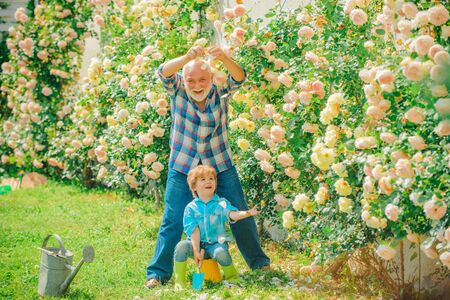 Flower rose care and watering. Grandfather with grandson gardening together. Gardener cutting flowers in his garden. Grandfather. Hobbies and leisure.