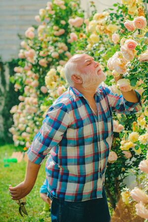 Grandfather in beautiful garden. Senior man plainting in garden. Planting flowers.