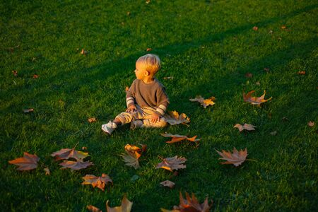 Warm moments of autumn. Toddler boy blue eyes enjoy autumn. Small stylish baby toddler on sunny autumn day. Happy childhood. Kids fashion. Childhood memories. Child autumn leaves background Stock fotó