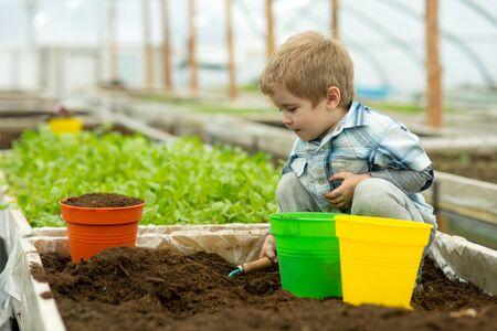 gardener in polytunnel. gardener polytunnel greenhouse. small boy gardener working in polytunnel orangery. modern polytunnel planting with little gardener. gardening Banco de Imagens